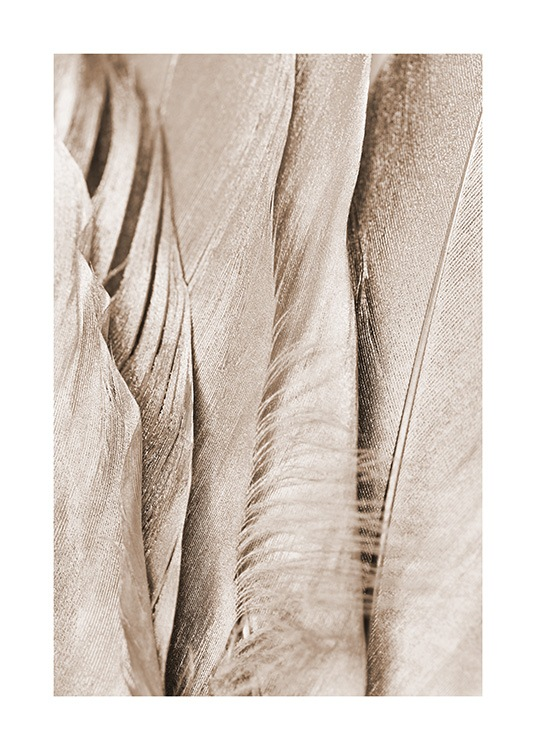 Detailed close up photograph with beige shimmering feathers