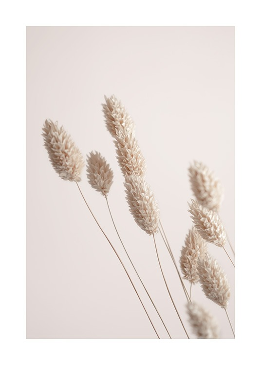 Photograph of beige dried grass with a light pink background behind