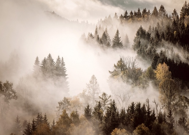 - Photograph of forest with mist and fog hanging over it