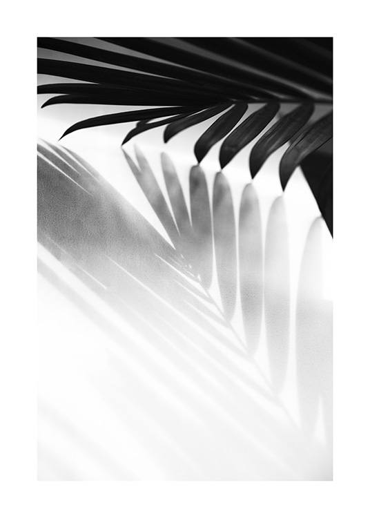 - Black and white photograph of shadow from a palm leaf