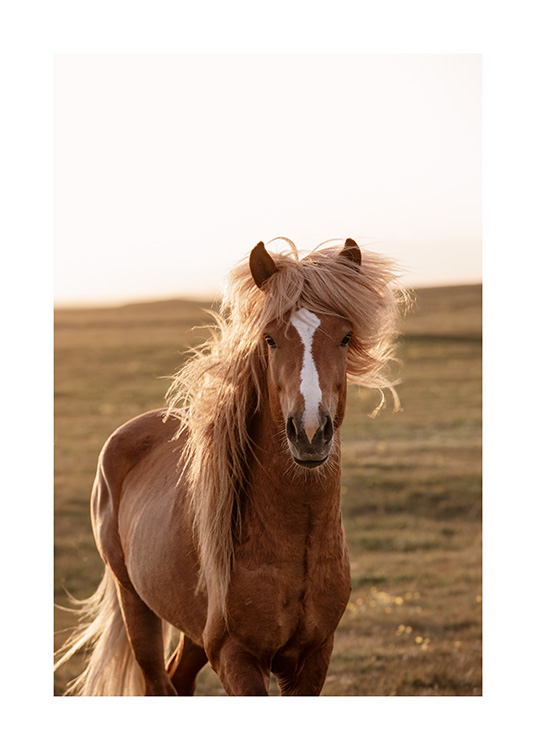 - Photograph of light brown horse in Iceland with green landscape in the background