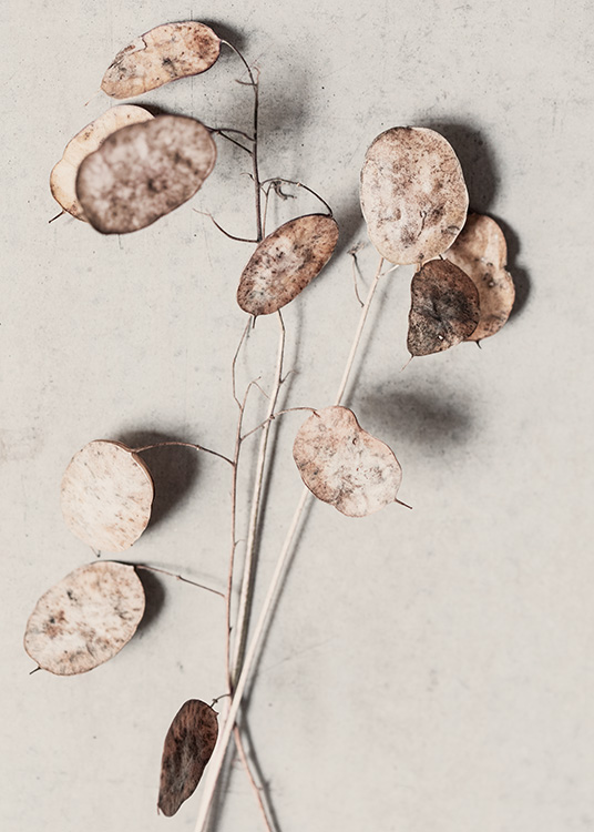 - Botanical print in beige of dried flowers with flat and round leaves on stone background