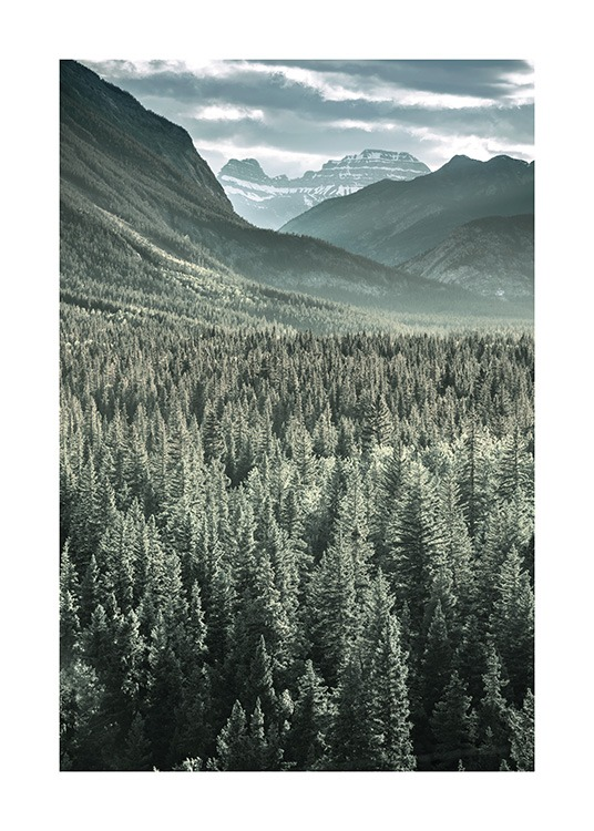 Rocky Mountains Forest Poster / Nature at Desenio AB (13592)