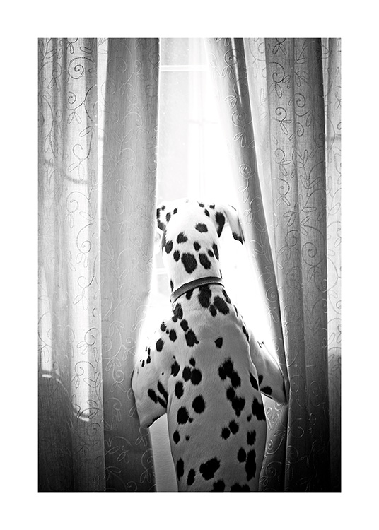 Dog in Window Poster / Pets at Desenio AB (13593)