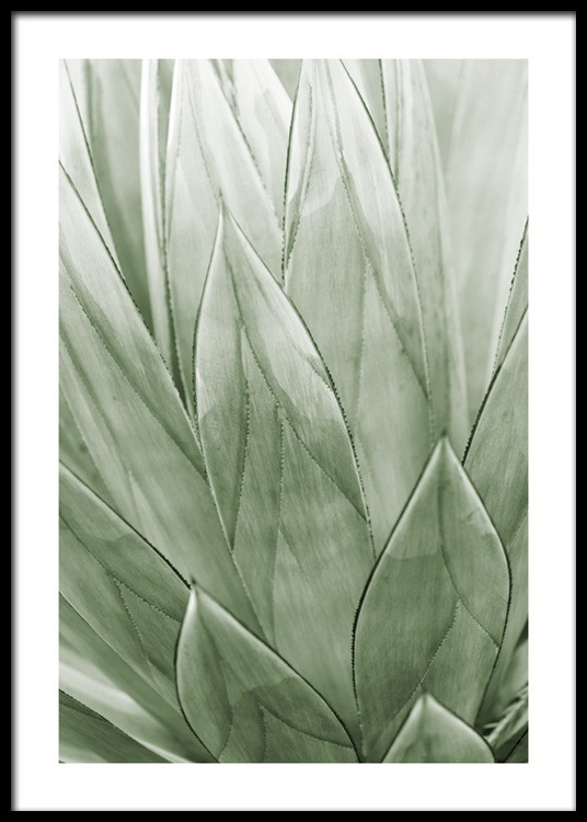Agave Plant Poster