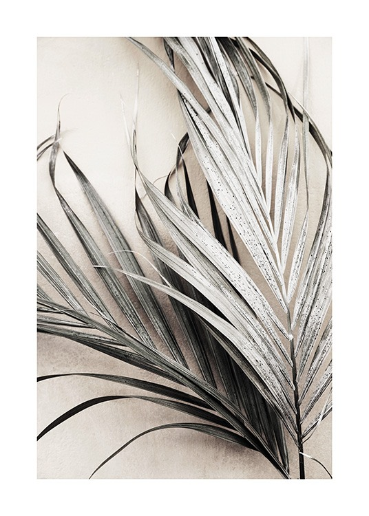 Dry Palm Leaves No3 Poster / Palms at Desenio AB (13672)