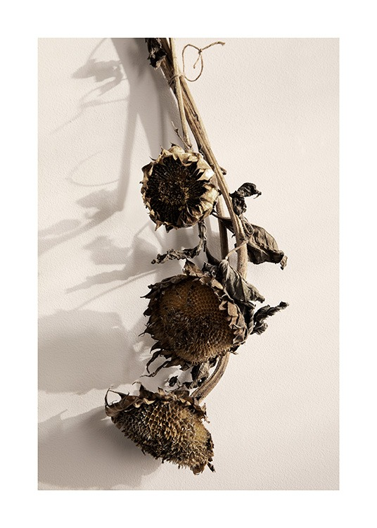 Dried Sunflowers No1 Poster / Flowers at Desenio AB (13835)