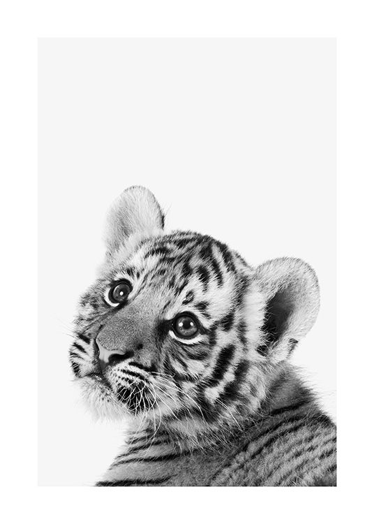 Baby Tiger Poster / Insects & animals at Desenio AB (13857)