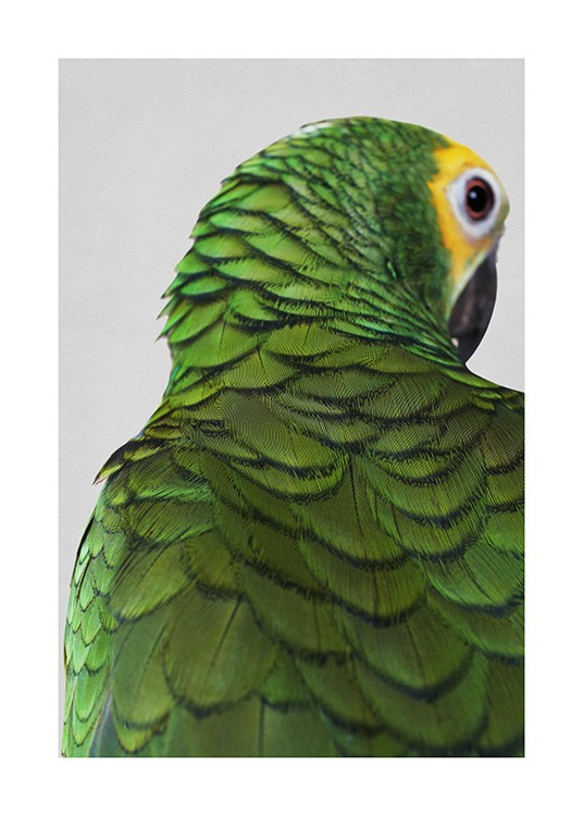 – Photograph of a parrot with a yellow head and green feathers against a grey background
