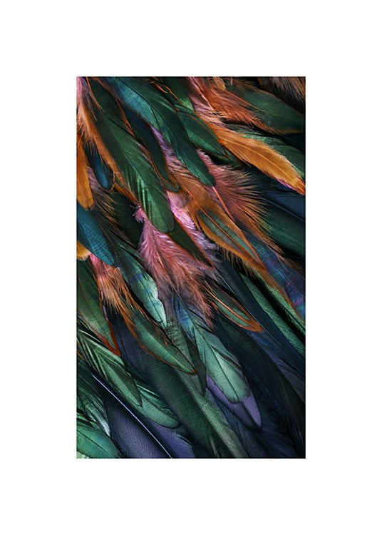 – Photograph with details of colorful bird feathers in blue, green, orange and pink