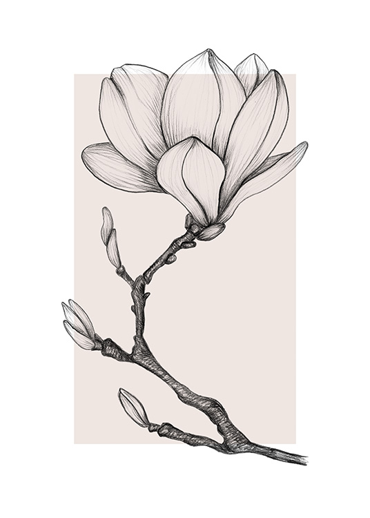 - Hand made drawing of a magnolia flower with buds on a light pink background