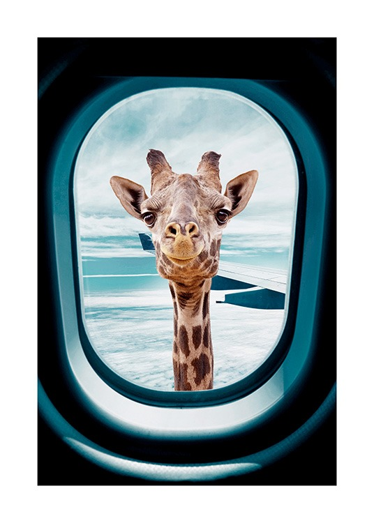 - Photograph of a curious giraffe looking through the window of an airplane