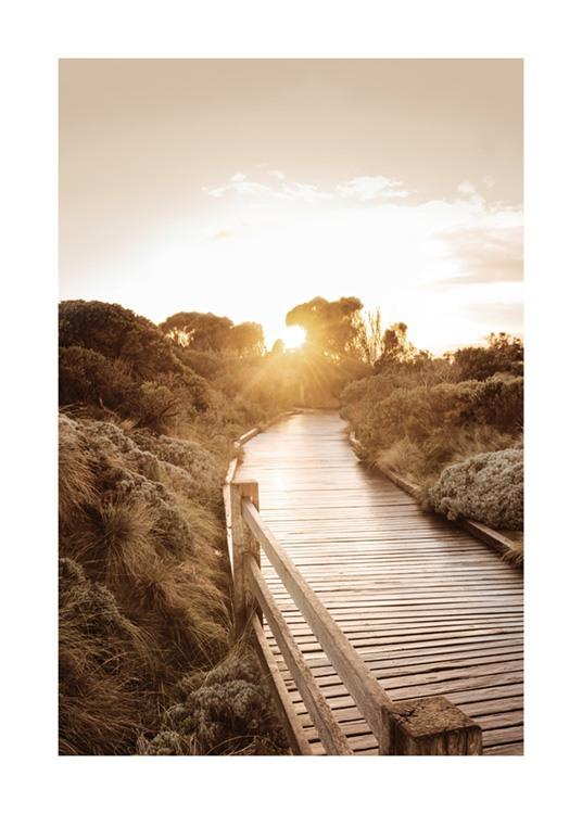 – Photograph of a boardwalk going through a countryside landscape in the sunset