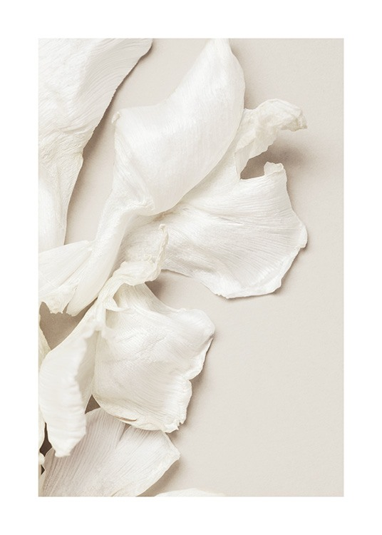 – Photograph of scattered tulip petals in white laying on a beige background
