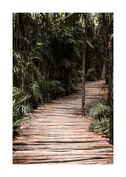 – Photograph of a jungle with palm trees surrounding a trail made of wood