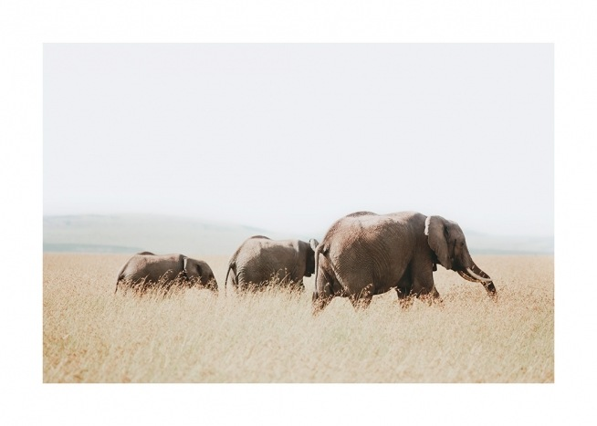 – Photograph of elephants walking together on the savannah
