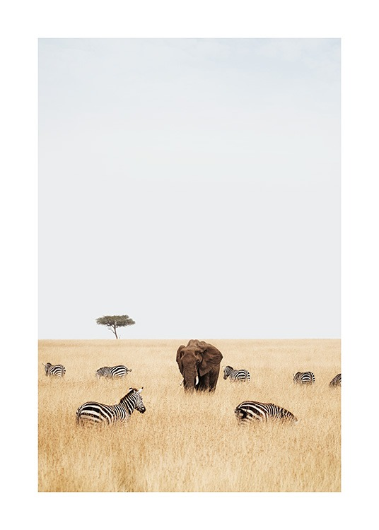 – Photograph of zebras and an elephant standing in high grass on the savannah