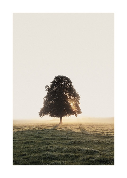– Photograph of a field with a tree in the background, with sunlight shining on it