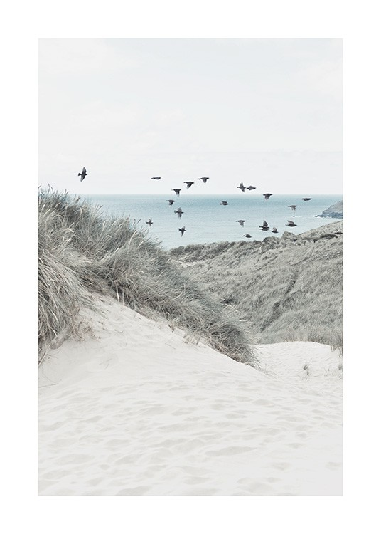 – Photograph of sand dunes and grass with a bunch of birds and a sea in the background