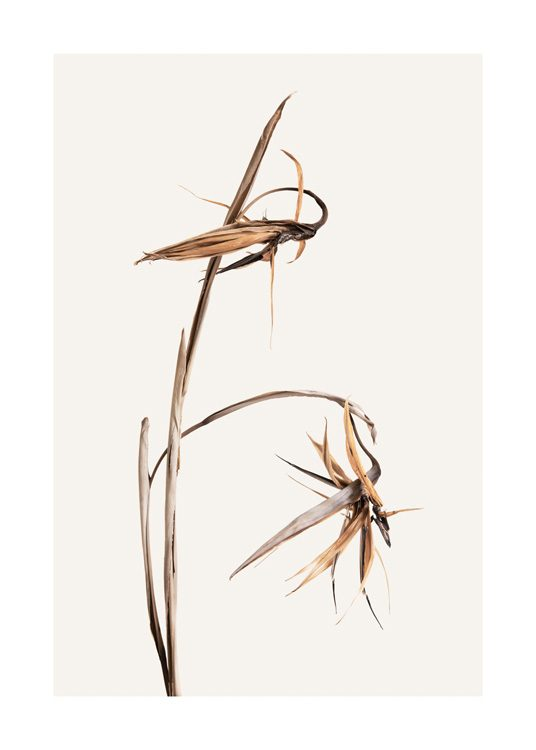 – Photograph of a pair of dried grass straws with orange leaves, against a light beige background