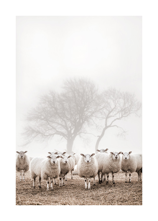 – Photograph of a bunch of sheep standing together in a field, with trees and fog in the background