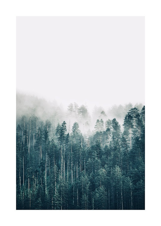 – Photograph of a pine tree forest covered in fog