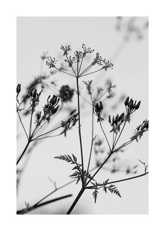 – Black and white photograph of a bundle of wild flowers with a light grey background behind them
