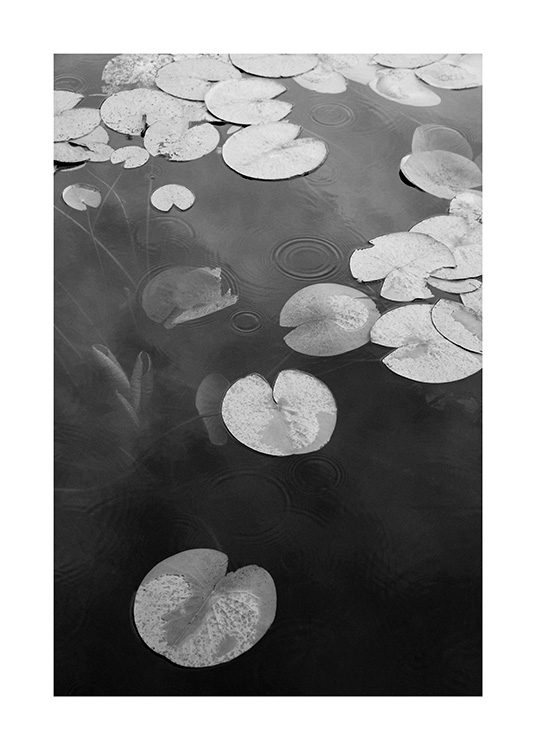 – Black and white photograph of a lake with water lilies in the water