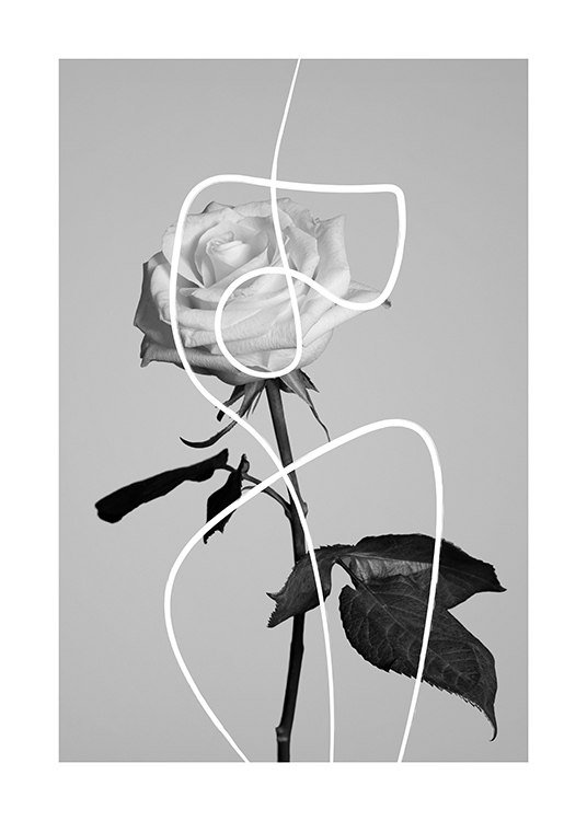 – Black and white photograph of a rose covered by a white, abstract line