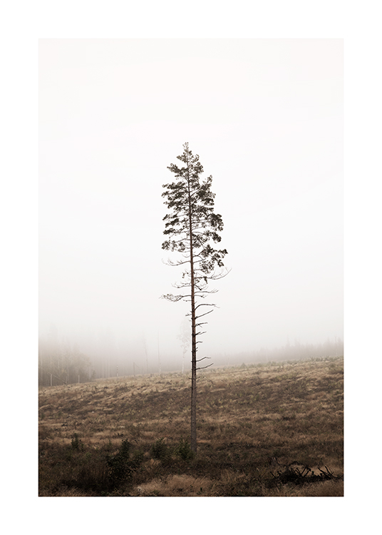 – Photograph of a single pine tree with a bare stem, with a foggy forest in the background