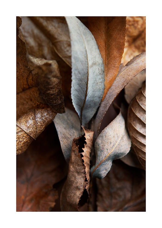 – Photograph with close up of brown and grey autumn leaves
