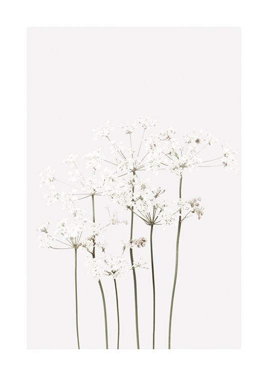 – Bundle of sprawling flowers in white with green stems, on a light grey background