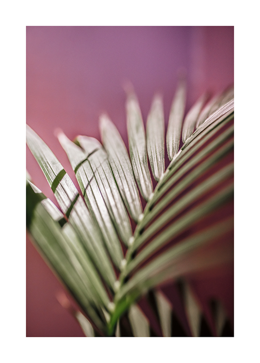 – A photograph of a palm leaf with a pink background