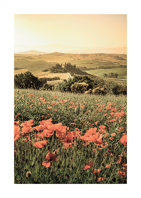 – Photograph of a green landscape with red poppy flowers in the grass