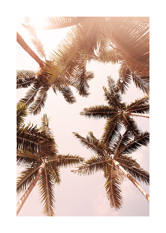 – Photograph of sunlit palm trees seen from underneath against a light pink sky