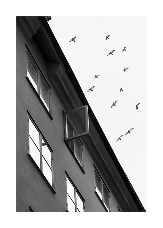 – Black and white photograph of a flock of birds flying over a building where a window is open