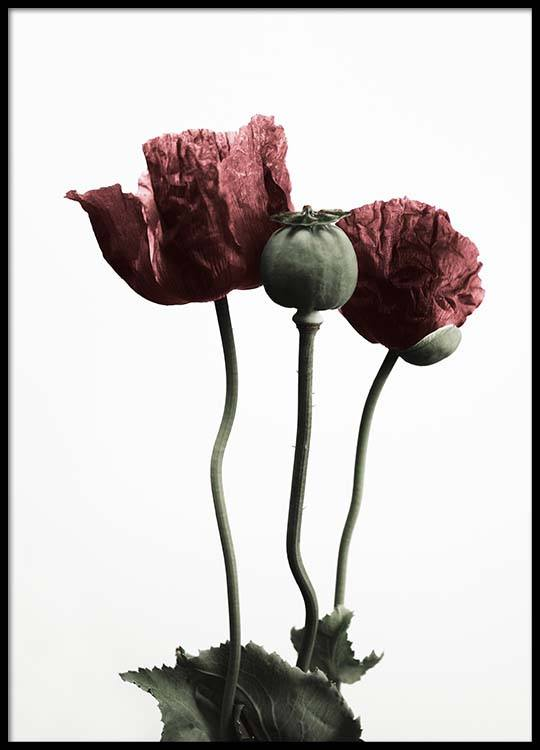 Red poppy flower poster mightylinksfo