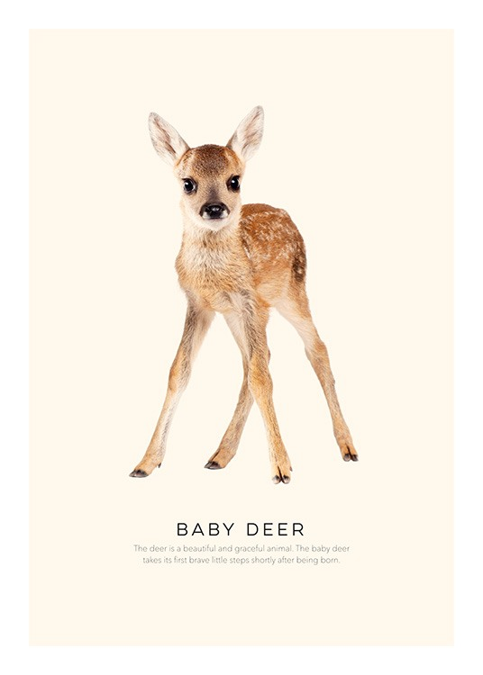 Baby Deer Poster / Kids posters at Desenio AB (2270)