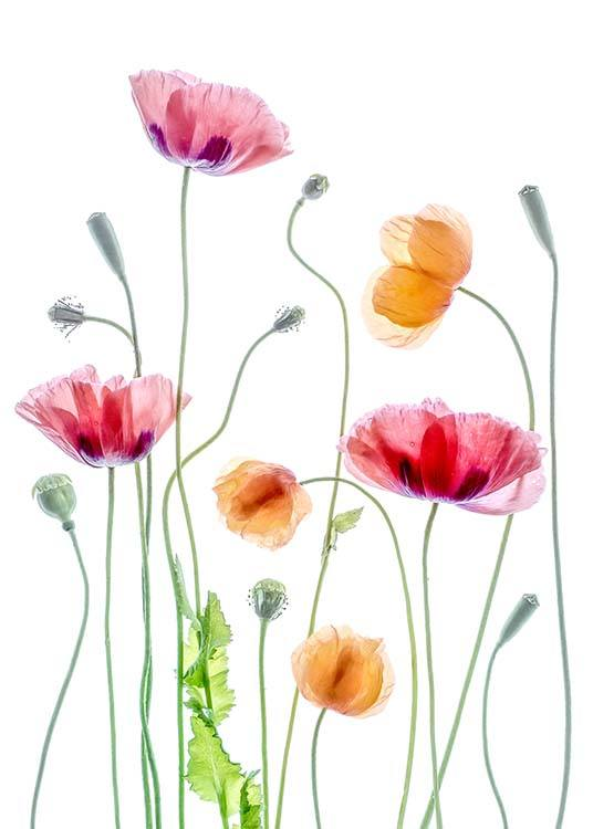 Poppies 1 Poster / Photography at Desenio AB (2323)