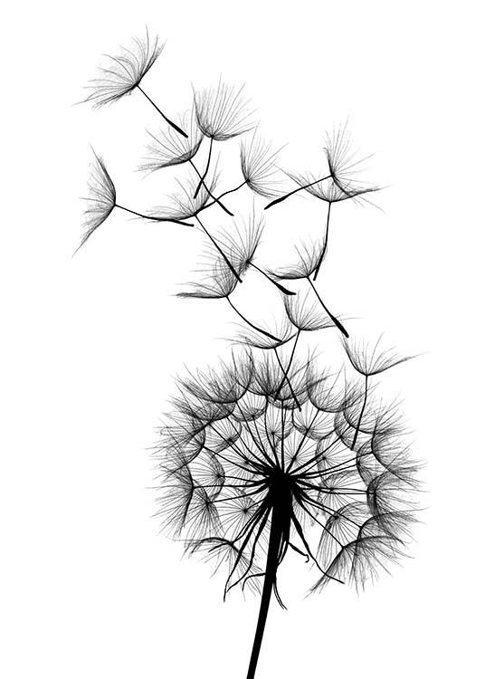 – Black and white botanical poster with a dandelion and seeds flying from it