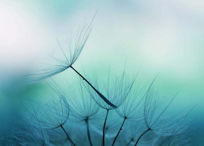 Dandelion Seed Poster / Photography at Desenio AB (2555)