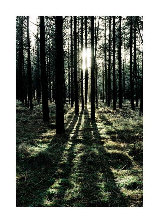 – Photograph of a sunny forest with sunlight shining in between the trees