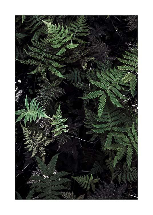 Forest Treasure Poster / Photography at Desenio AB (2827)