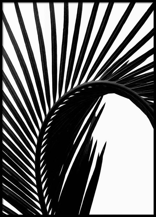 Black Palm Leaf Two Poster
