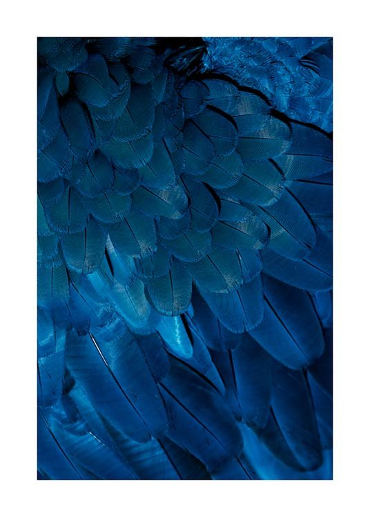 Deep Blue Feathers Poster / Photography at Desenio AB (3538)