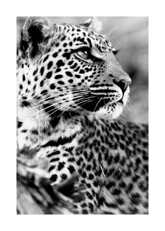Leopard Poster / Black & white at Desenio AB (3541)