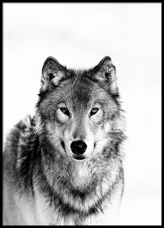 wolf b w poster