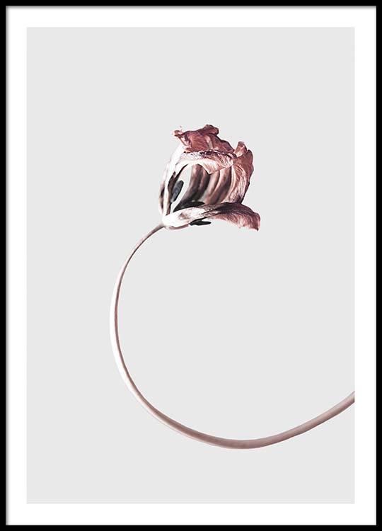 simple elegance poster