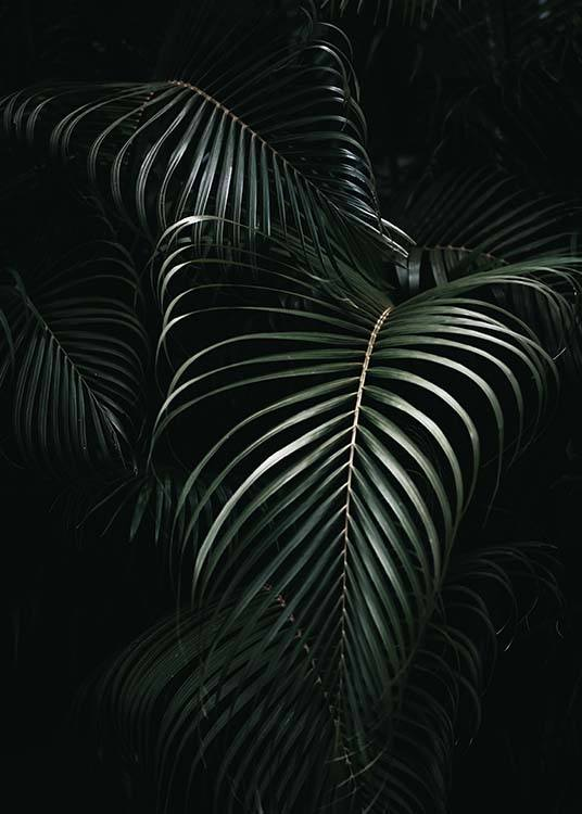 Dark Green Palm Leaves No1 Poster / Photography at Desenio AB (3772)