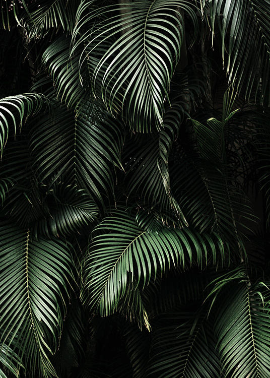 Dark Green Palm Leaves No2 Poster / Photography at Desenio AB (3773)